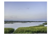 Summer Marsh Fine Art Print