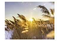 Marsh Grass Fine Art Print