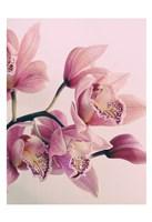 Pink Orchids Fine Art Print