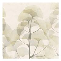 Sunkissed Ginko Fine Art Print
