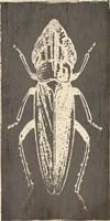 Bug Life Three Fine Art Print