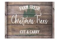 Farm Fresh Christmas Trees Fine Art Print