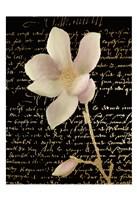 Magnolia Gold 2 Fine Art Print