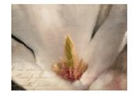 Magnolia Center Fine Art Print
