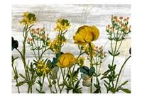 Wildflower Jar 5 Fine Art Print