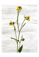 Wildflower Jar 11 Fine Art Print