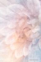 Soft Dahlia Pastel Blue Lilac Fine Art Print