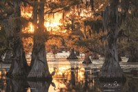Sunset in the Swamps Fine Art Print