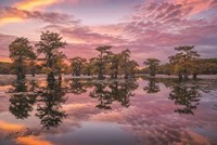 Magnificent Sunset in the Swamps Fine Art Print