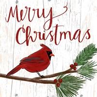 Christmas Cardinal Fine Art Print