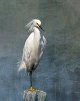 Snow Egret Fine Art Print