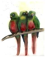 Green Parrots Fine Art Print