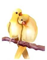 Yellow Parakeets Fine Art Print