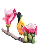 Pink Beak Fine Art Print