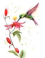 Humming Bird II Fine Art Print