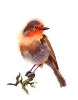 Sunset Bird Fine Art Print