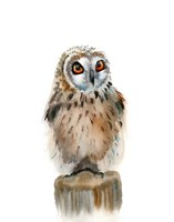 Spotted Owl Fine Art Print