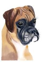 Boxer Babe Fine Art Print