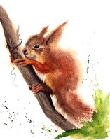 Squirrel Fine Art Print