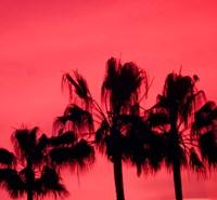 Neon Palm Trees III Fine Art Print