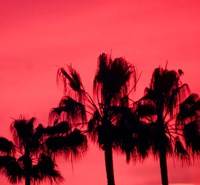 Neon Palm Trees III Fine Art Print