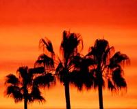 Neon Palm Trees IV Fine Art Print