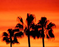 Neon Palm Trees IV Fine Art Print