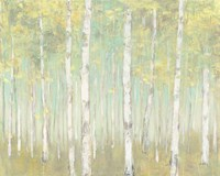 Sylvan Birches Fine Art Print