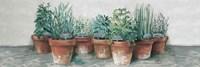 Pots of Herbs II Cottage v2 Fine Art Print