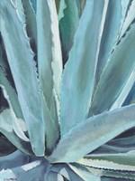 Blue Agave Fine Art Print