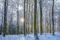 Frosty Forest Fine Art Print