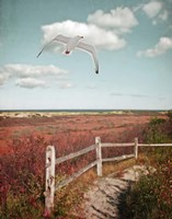 Gull over Coastal Trail Fine Art Print