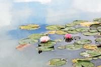 Monet's Garden Fine Art Print