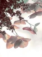 Pink & Aqua Hydrangeas Fine Art Print