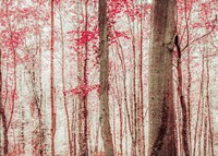 Pink & Brown Fantasy Forest Fine Art Print