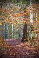 Rust Fall Forest Fine Art Print