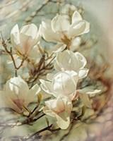 Vintage Inspired Magnolias Fine Art Print