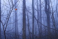 Red Cardinal in a Blue Forest Fine Art Print