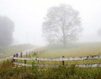 Foggy Rural Scene Fine Art Print