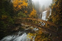 A Bridge in the Forest Fine Art Print
