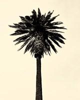 Palm Tree 1979 Tan Fine Art Print