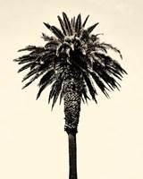 Palm Tree 1996 (Tan) Fine Art Print