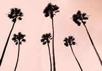 Palm Trees 1997 Copper Fine Art Print