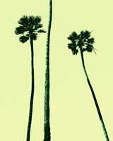 Palm Trees 2000 (Cyan) Fine Art Print