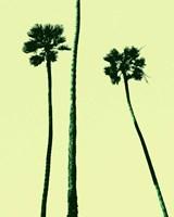 Palm Trees 2000 (Cyan) Fine Art Print