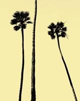 Palm Trees 2000 (Yellow) Fine Art Print