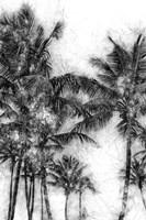 Dorado Palms 1 Fine Art Print