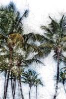 Dorado Palms 2 Fine Art Print
