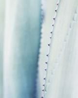 Pale Blue Agave No. 2 Fine Art Print