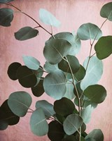Sage Eucalyptus No. 1 Fine Art Print